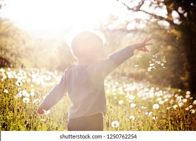 Toddler Child Playing With Dandelion Seeds In A Taraxacum Flower Meadow. Bokeh, backlit.