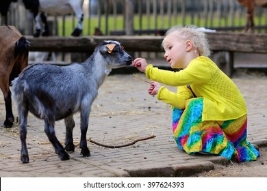 Toddler girl petting little goat in the kids farm. Cute kind child feeding animals in the zoo.