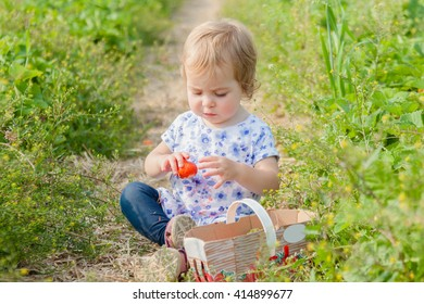 Toddler girl picking, holding and eating strawberries. Family time on self-picking farm, bright sun, summer.