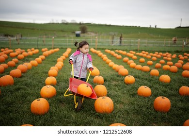 toddler girl picking pumpkin in farm