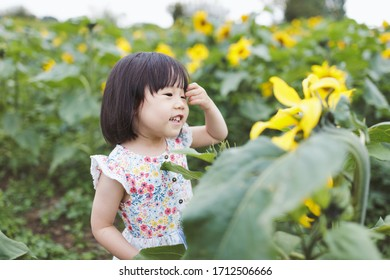 toddler girl play at summer sunflower filed,countryside of Northern Ireland