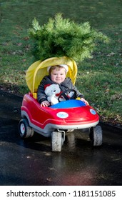 Toddler in a toy car with  small Christmas tree on the roof
