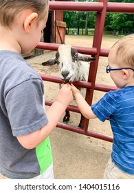 Toddlers at the farm. Brothers, twins feeding the goat. Hands touching.
