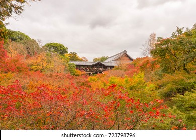 tofukuji temple, autumn
