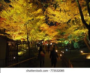 Tofukuji Temple. Night illumination.