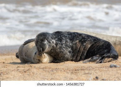 Togetherness. Animals in love cuddling. Affectionate seals hugging. Best friends forever. Non-human emotion. Pair of bonding mammals in a loving embrace. Cute animal relationship meme image.