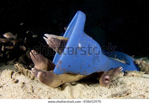 Toilet Dumped Sea Home Moray Eels Stock Photo (Edit Now