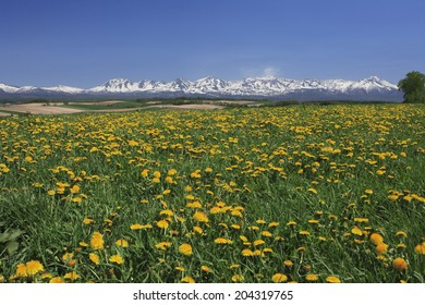Tokachi Mountain Range And Dandelion