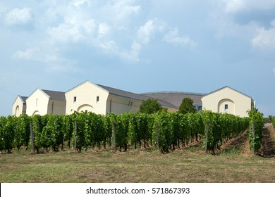 Tokaj vineyard in famous region in the summer, Hungary.