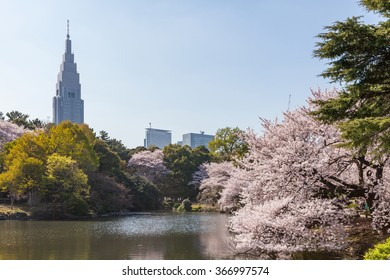 TOKYO - APRIL 2: The pond in Shinjuku Gyoen national garden with high-rise building on April 2 , 2015 in Tokyo. This park is a very famous and popular Cherry-blossom(Sakura) viewing spot in Tokyo.