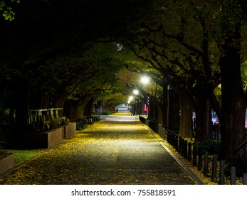 Tokyo autumn leaves