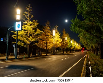 Tokyo autumn leaves Night view