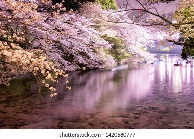 Tokyo in the beautifull cherry blossom season