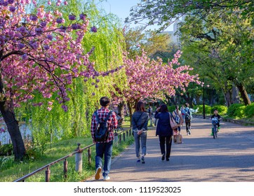Tokyo, Japan, 04/19/2017, Spring in Ueno Park. Today, Ueno Park is a very famous and visited place in Tokyo, is considered the best in the capital for the contemplation of cherry blossoms.