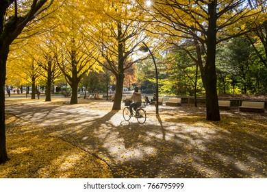 TOKYO, JAPAN - 2012 NOVEMBER 14 - People visit Ginkgo Avenue in Tokyo . Colorful Yellow Ginko Leaves Branch Tree