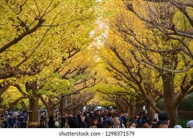 TOKYO, JAPAN: 25 November 2018 : Meiji  Jingu Avenue is popular spot for see yellow ginkgo leaf in Tokyo