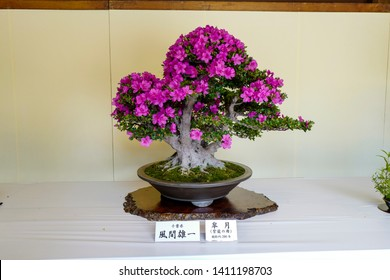 Tokyo, Japan, 2rd, June, 2017. Bonsai plants exhibition at Meiji Shrine. A bon is a tray shaped pot and sai translates as planting, so bonsai is planting in a tray.