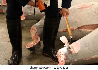 Tokyo, Japan - 7 November 2014: Tuna Auction at Tsukiji Market