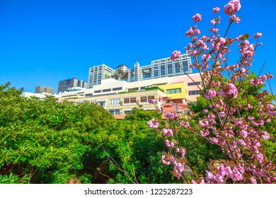 Tokyo, Japan - April 19, 2017: Fuji Television Headquarters in Odaiba, Minato district with branch of cherry blossom in the foreground. Spring landscape. Icon and landmarks of Odaiba island.