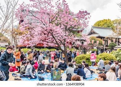 TOKYO, JAPAN - APRIL 2, 2019: Many people enjoy hanami party under sakura cherry blossoms in full bloom at Ueno Park, Tokyo, Japan.