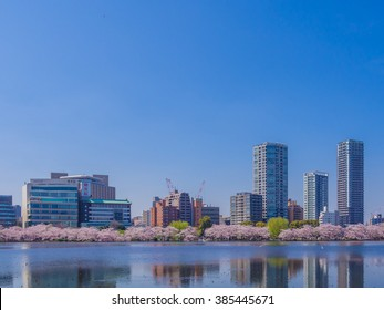 TOKYO, JAPAN - APRIL 2: Cherry blossoms festival in Ueno Park on April 2, 2015 in Tokyo, Japan. Ueno Park is the most famous place to enjoy viewing cherry blossoms which is a Japanese custom.