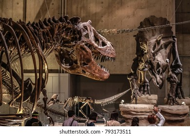 Tokyo, Japan - April 29 2017, Tyrannosaurus Rex (T rex) skeleton and Triceratops fossil at National Museum of Nature and Science Tokyo