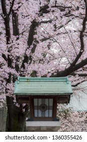 Tokyo, Japan - April 4th 2019: Entrance of Hie Shrine with the traditional lantern with imperial sign and the sakura cherry blossoms.