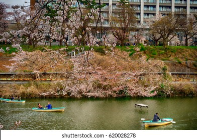 TOKYO, JAPAN - APRIL 5: Cherry blossom at Kagurazaka 5 April, 2017 at Tokyo, Japan. Cherry blossom is a main festival in Japan meaning spring has arrived.
