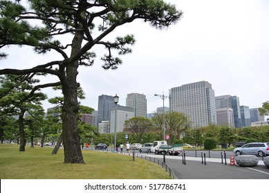 Tokyo, Japan - April 9, 2016: Pine tree garden at the Imperial Palace in Tokyo