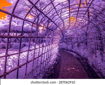 Tokyo, Japan. An arbor/trellis made of bamboo. Taken with a specially modified camera to only see enhanced infrared light invisible to the human eye.