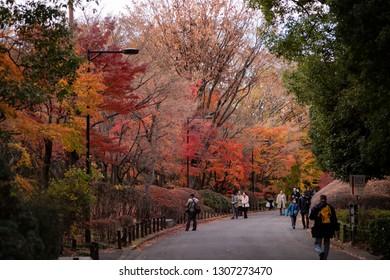 Tokyo, Japan - December 10 2018: People enjoy the fall foliage in Kitanomaru Park in Chiyoda.