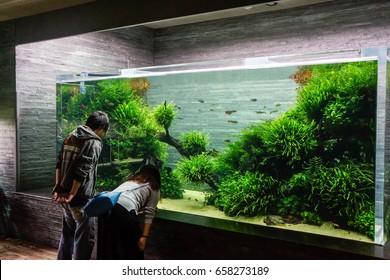 Tokyo, Japan - December 11, 2015: Sumida Aquarium, Couple of tourist looking in very large planted aquarium.