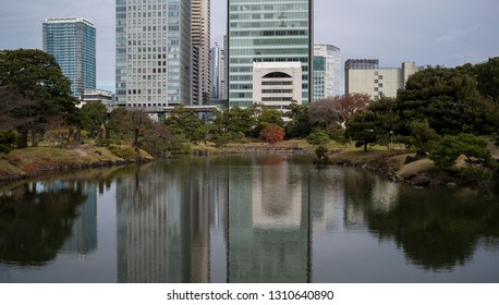 Tokyo, Japan - December 12 2018: The fall foliage in Kyu Shiba Rikyu Garden in the middle of business district of downtown Tokyo.