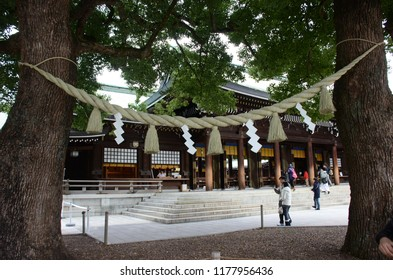 TOKYO, JAPAN - DECEMBER 14,2014: The holy tree with the Shimenawa in Meiji shrine area, Tokyo