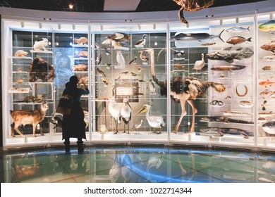 TOKYO, JAPAN - DECEMBER14 2016: National Museum of Nature and Science offers a wide variety of natural history exhibitions.