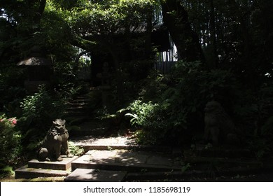 TOKYO, JAPAN - JUNE 3, 2018: Foo dog placed in front of an old shrine in Nezu museum.