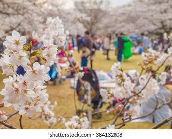 TOKYO, JAPAN - MAR 23: Cherry blossoms in full bloom at Hikarigaoka Park in Tokyo, Japan on March 23, 2013. Tokyo is both the capital and largest city of Japan.