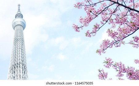 Tokyo JAPAN - March 2018: Tokyo Sky Tree and cherry blossom during spring. Tokyo Sky Tree is one of the famous landmark in Tokyo. It is the tallest structure in world when built.