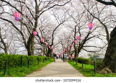 Tokyo, Japan - March  27, 2018 :  Tourists walking under beautiful cherry blossoms  and strolling in the rapeseed field in Gongendo Park in Saitama, Japan
