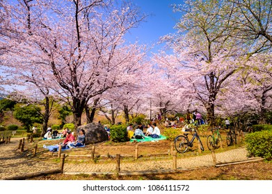 TOKYO JAPAN - MARCH 28, 2018 : Sumida park, Unidentified tourists visit the cherry blossom. this phenomenon only once year. It is attractive to both Japanese and foreigners, One of Tokyo's must visit.