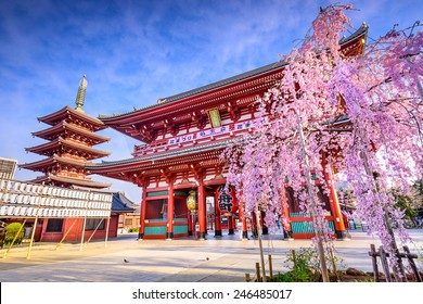TOKYO, JAPAN - MARCH 29, 2014: Spring cherry blossoms at Sensoji Temple's Hozomon Gate in the Asakusa District. Senso-ji was founded in 628 AD and is one of the most well known temples in the country.