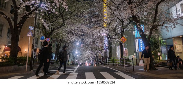 TOKYO, JAPAN - MARCH 31ST, 2019. Beautiful view of Sakuragaokacho street and illuminated buildings with cherry blossom trees in Shibuya at night. Selective focus.