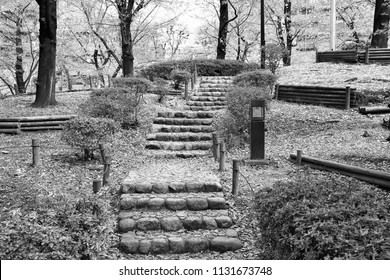 Tokyo, Japan - mysterious path at famous Sumida park. Black and white vintage style.