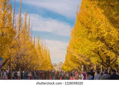 TOKYO, JAPAN : Nov 25 , 2017 : People visit Ginkgo Avenue in Tokyo. Colorful Yellow Ginko leaves branch tree in autumn at Meiji Jingu Gaien (Icho Namiki), Tokyo, Japan.