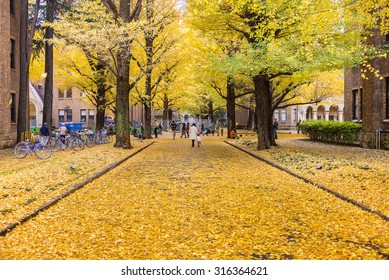 TOKYO, JAPAN - NOV 30, 2014: The Hongo campus of University of Tokyo in Autumn. The main Hongo campus occupies the former estate of the Maeda family, Edo period feudal lords of Kaga Province.