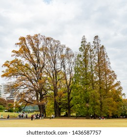 TOKYO, JAPAN - NOVEMBER 16, 2018: Day scene of autumn leaves at Shinjuku Gyoen park with autumn leaves, Tokyo prefecture, Japan