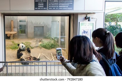 Tokyo, Japan - November 17, 2017: Unknow people watching a Giant panda Shin Shin (female) eating bamboo at Ueno Zoological Gardens, Ueno Zoo in Ueno Park in central Tokyo.