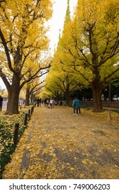 Tokyo, Japan - November 29, 2016: The Ginkgo Avenue in Meiji Jingu Gaien Park is one of the most famous places for its beautiful autumn leaves in Tokyo, Japan