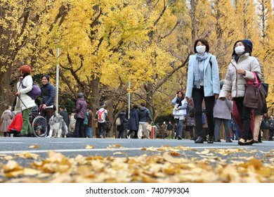 TOKYO, JAPAN - NOVEMBER 30, 2016: People visit autumn Ginkgo Avenue in Tokyo, Japan. Icho Namiki Avenue is famous for its celebration of autumn leaves.