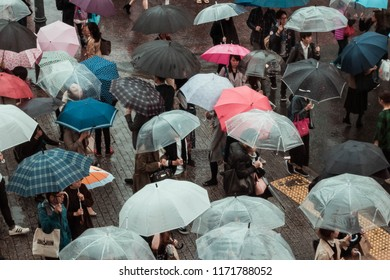 TOKYO, JAPAN - OCT 21, 2017:  Mass of people holding umbrella on Shibuya Crossing in rainy day. The rain in October affected by powerful Typhoon No.21(Lan).